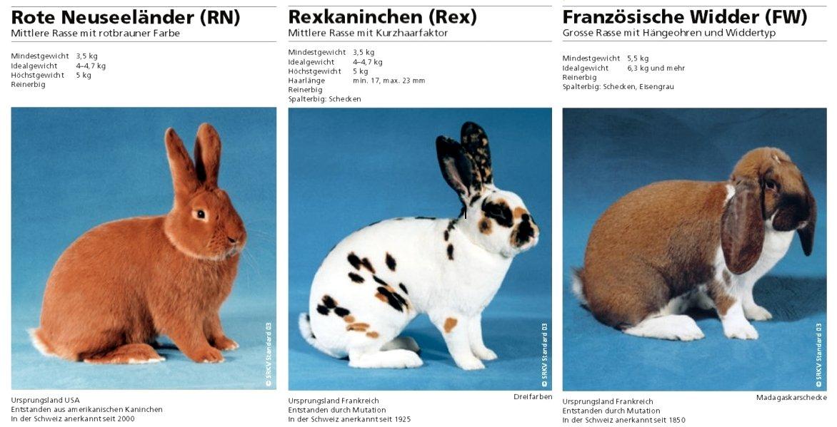 Стандарты пород кроликов