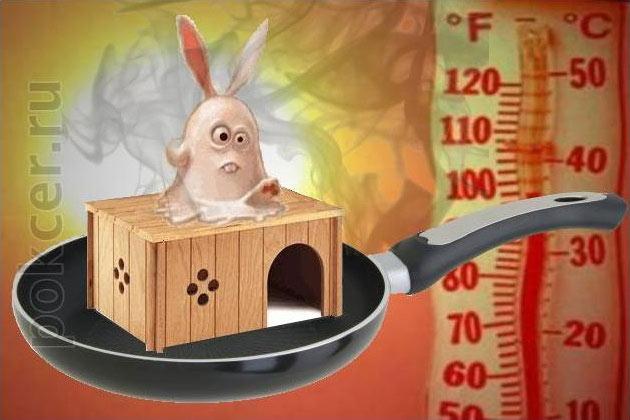тепловой солнечный удар кролика