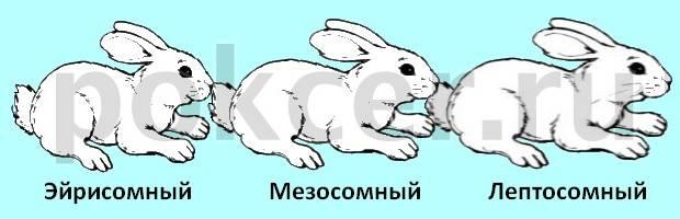 Конституция кроликов