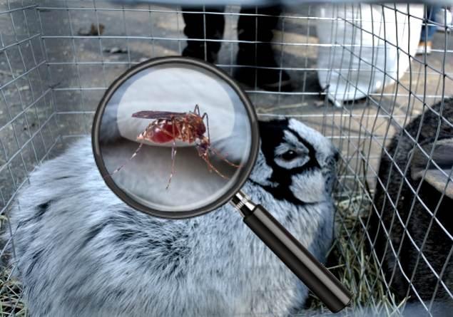 Защита кроликов от укусов