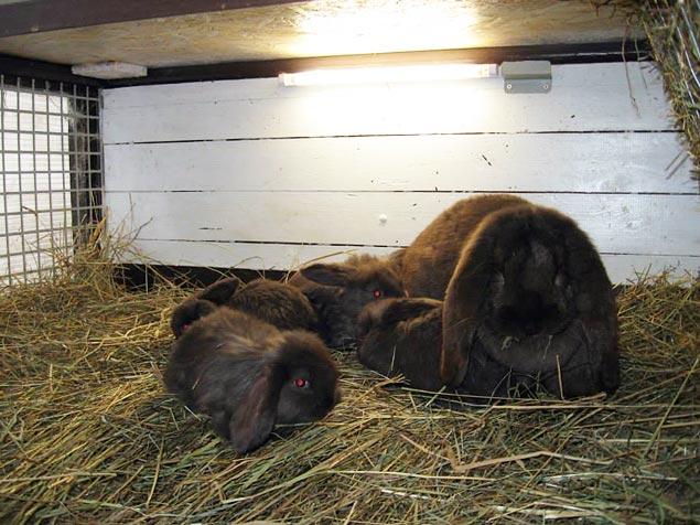 освещение кроликов