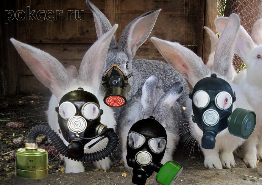 чистый воздух кроликам