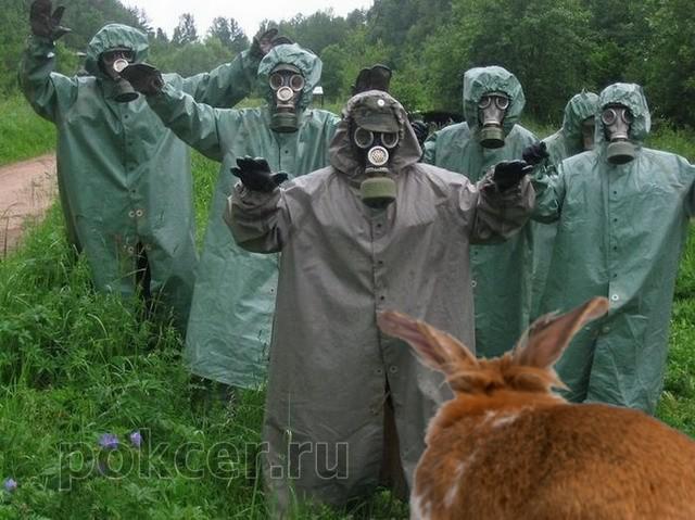 заразиться от кролика