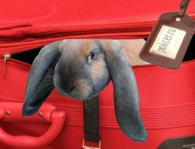 кролик в транспорте