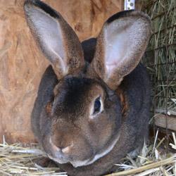Забой кроликов в домашних условиях, как и что нужно 46