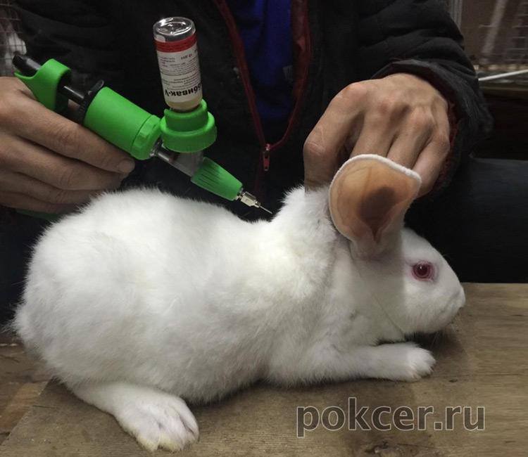 крольчиха кормит