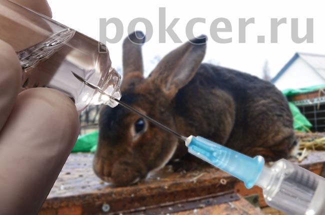 вакцина для кролика