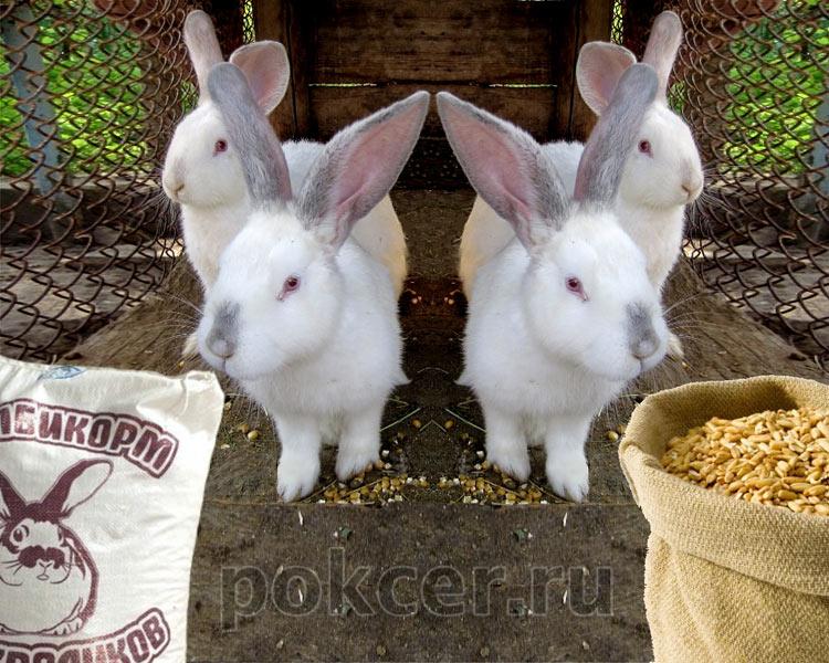 кролик выбирает корм